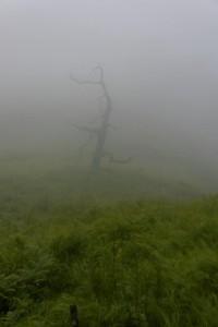 Un arbre dans la brume