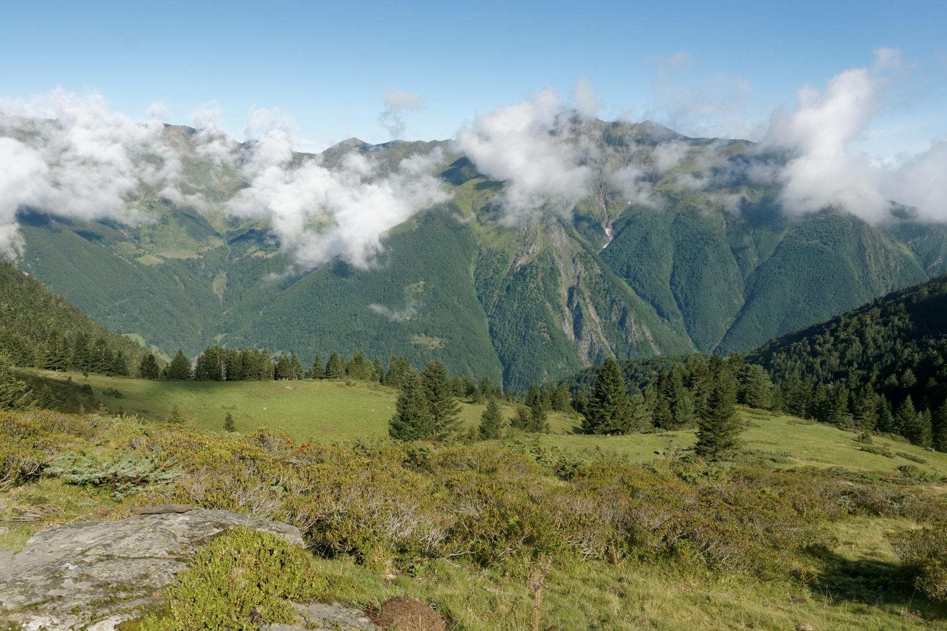 La clairière dans la montée vers le col de Riou